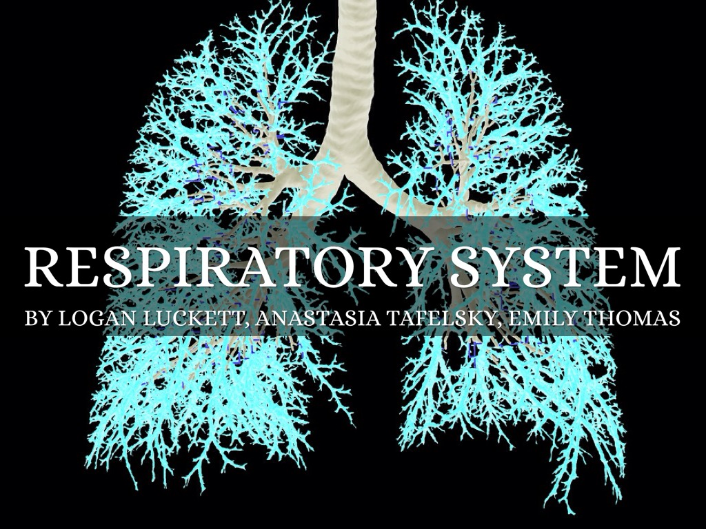 Respiratory System By Logan Luckett