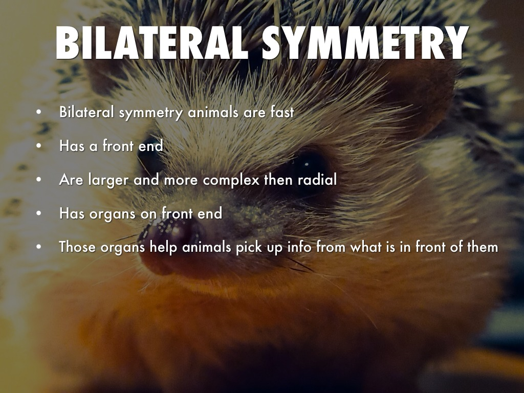 Animal Symmetry By Will Mitchell