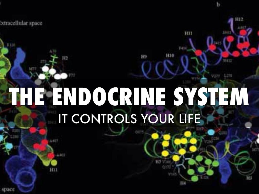Endocrine System By Monica Fernandez