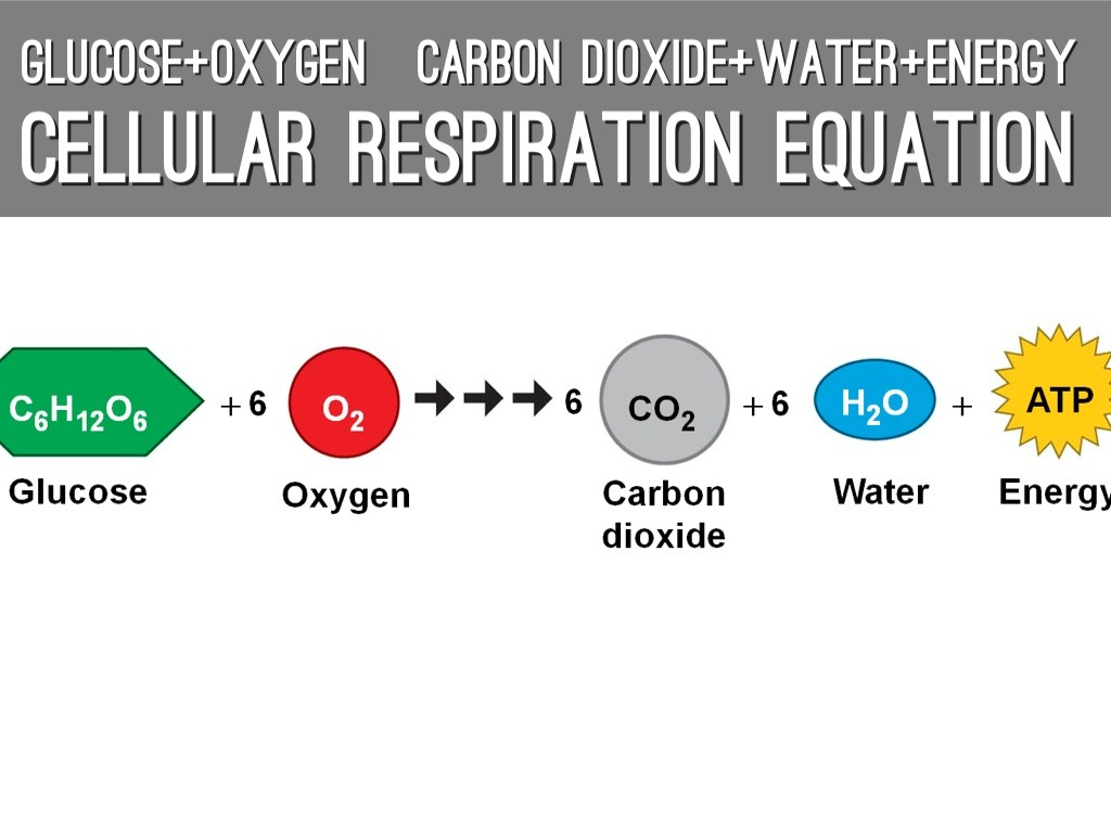 Find The Chemical Equations For Both Photosynthesis And