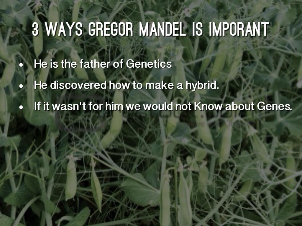 Gregor Mendel By Thorstadjm