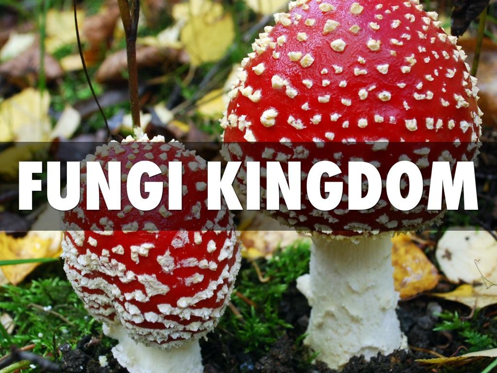 Protista And Fungi Kingdom By Ivy Koh