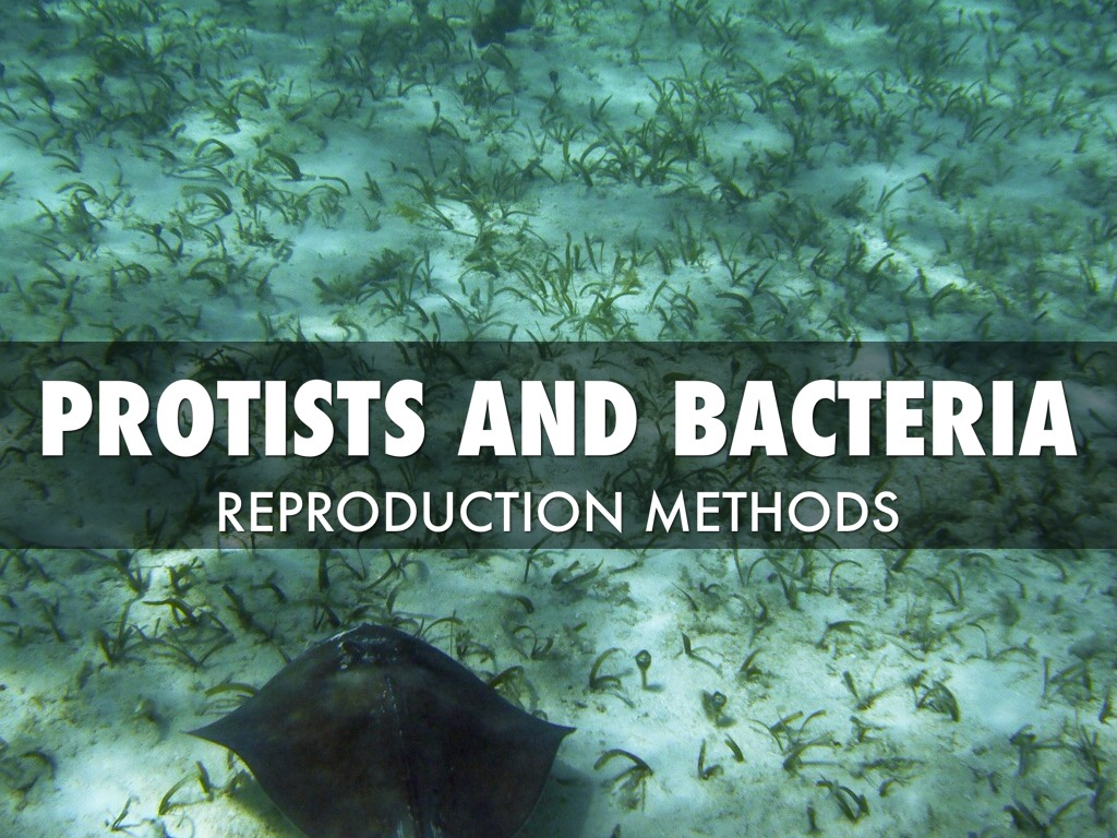 Reproduction Of Protists And Bacteria By Vsk