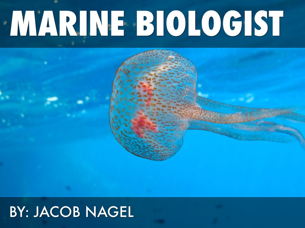 Jacobs Science Career Worksheet By Jacob Nagel