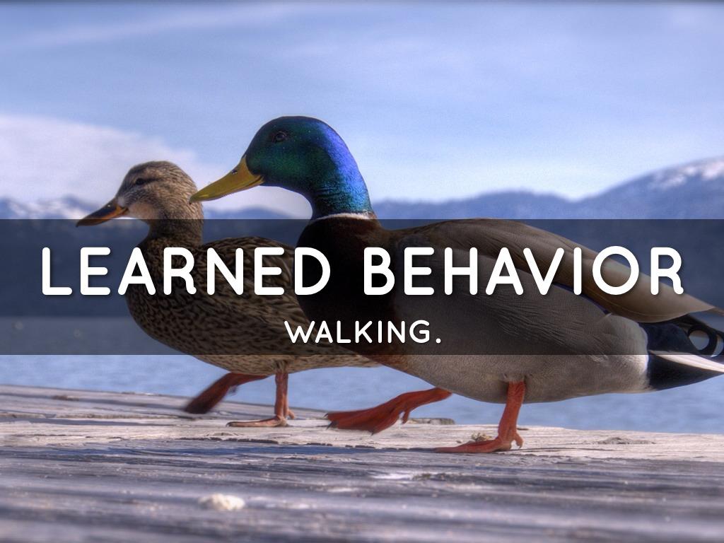 Inherited Vs Learned Traits By Kelsea Burke