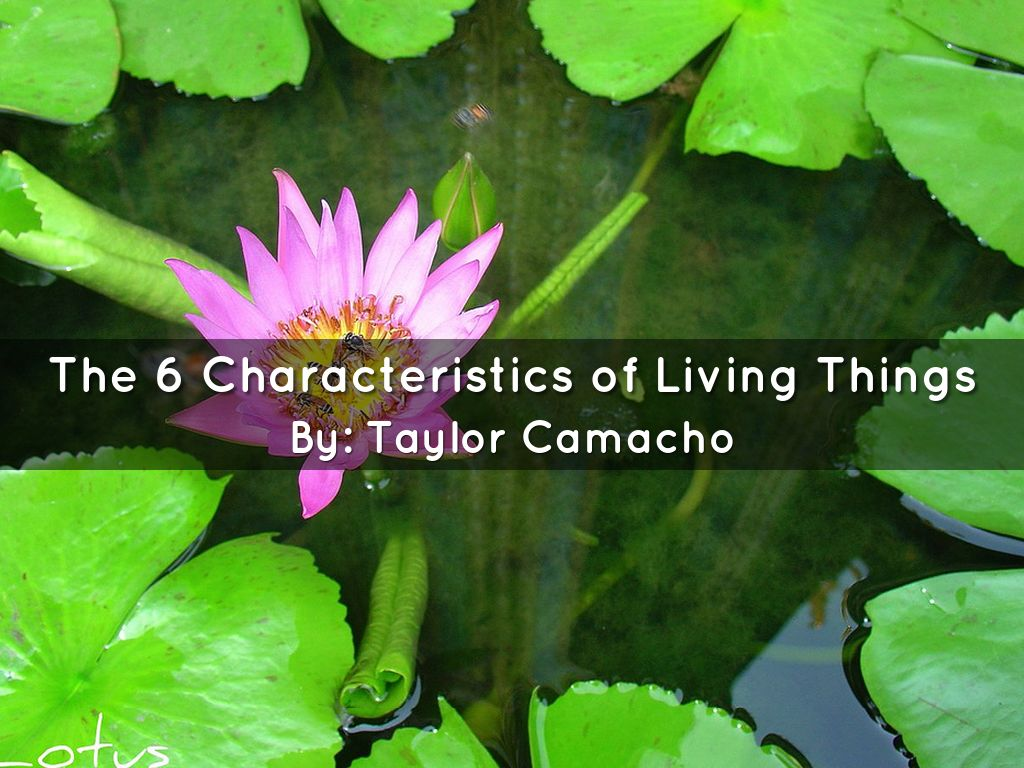 The 6 Characteristics Of Living Things By Taylor