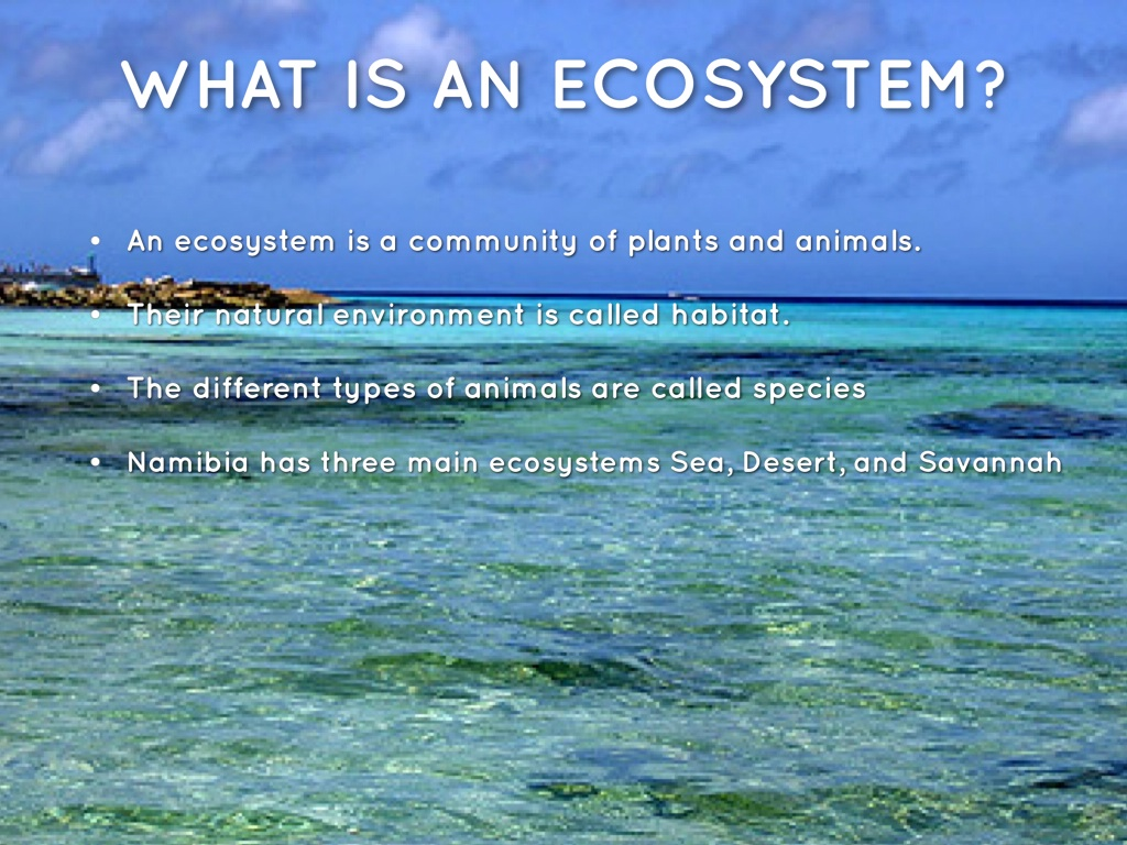 Sea Ecosystem By Evelise S