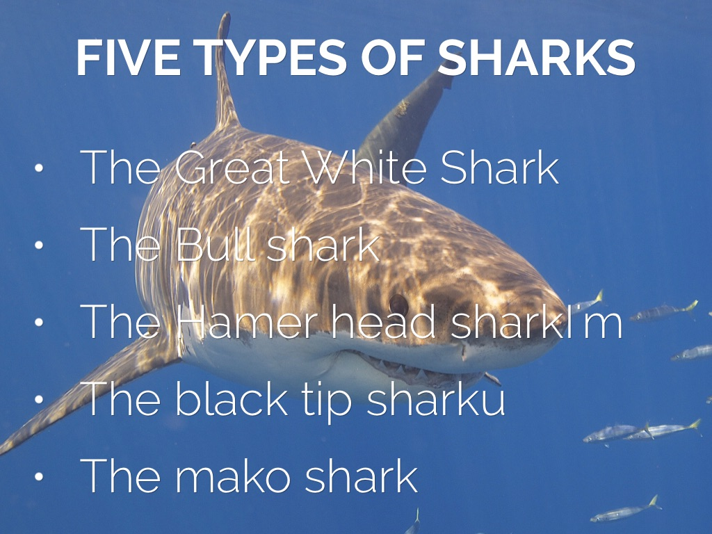 Sharks The Beast Of The Ocean By Byron By Miss Scholtz