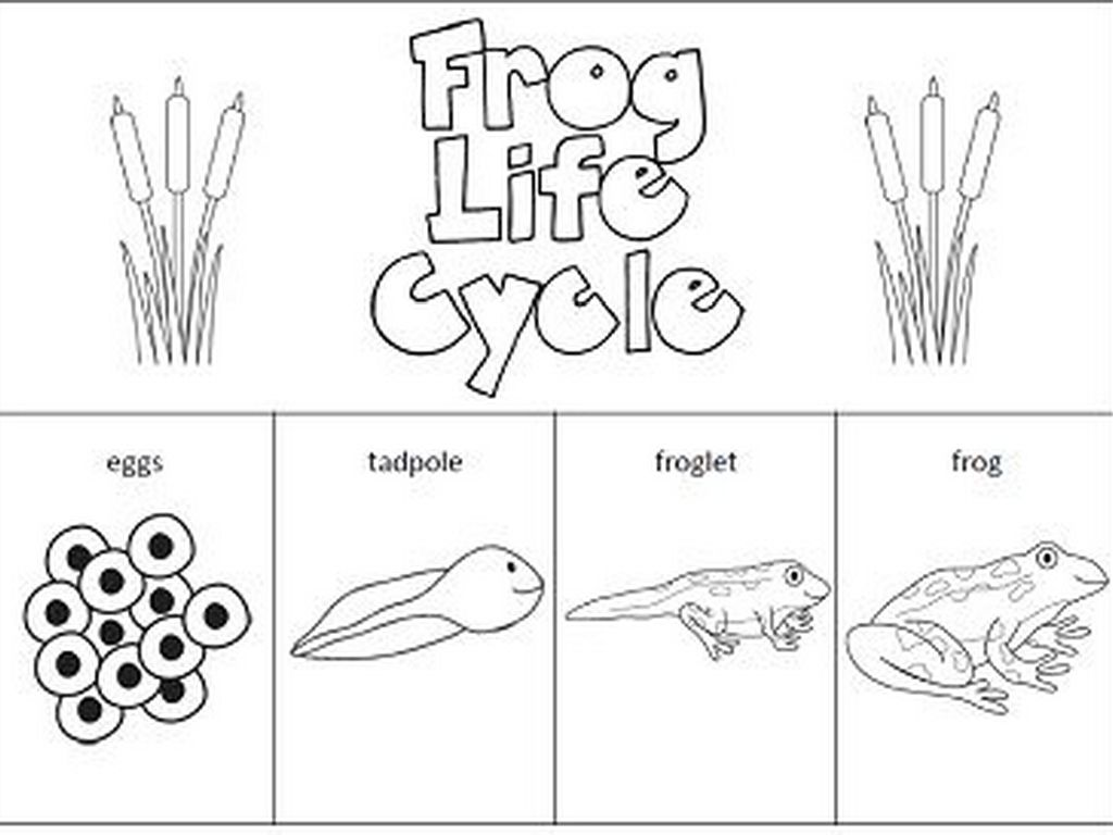 Worksheets Frog Life Cycle Worksheet Waytoohuman Free
