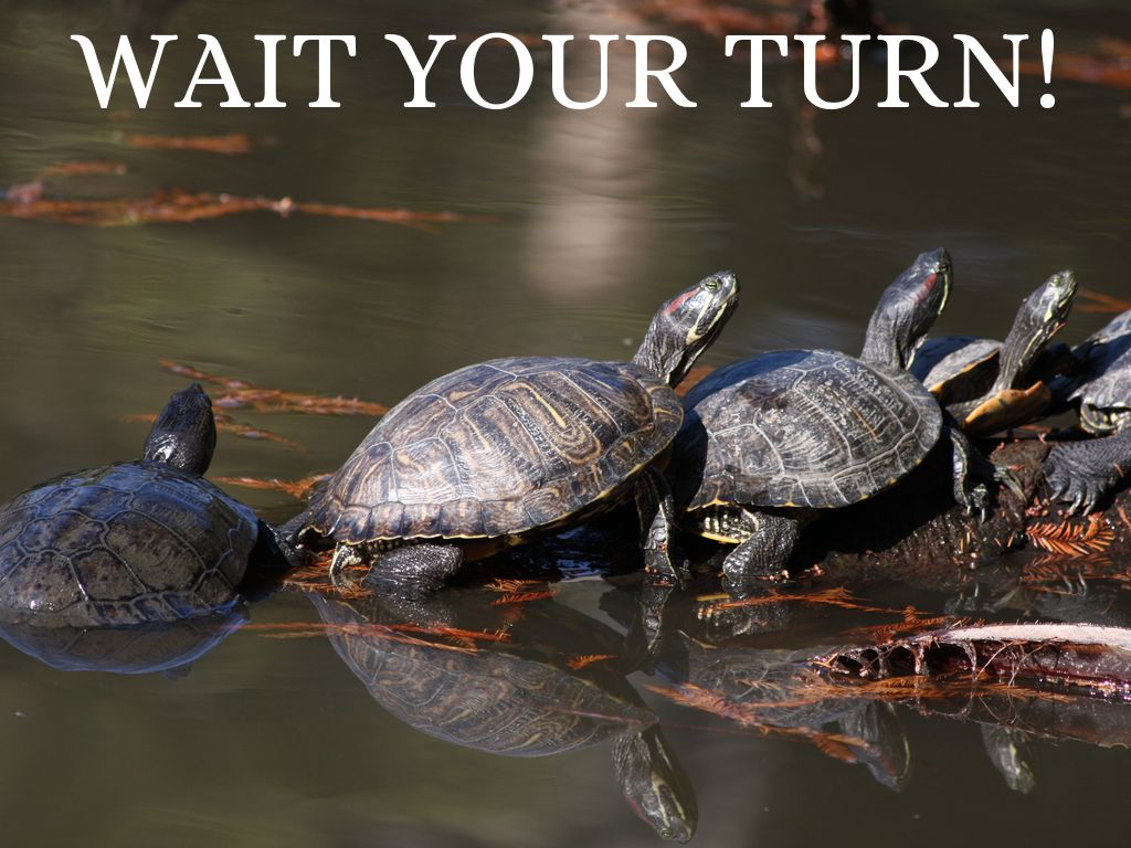 Wait Your Turn By Roxanayant