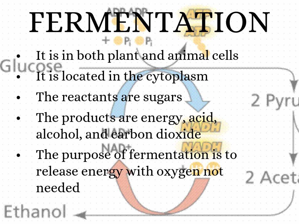 Fermentation Photosynthesis Compare Amp Contrast