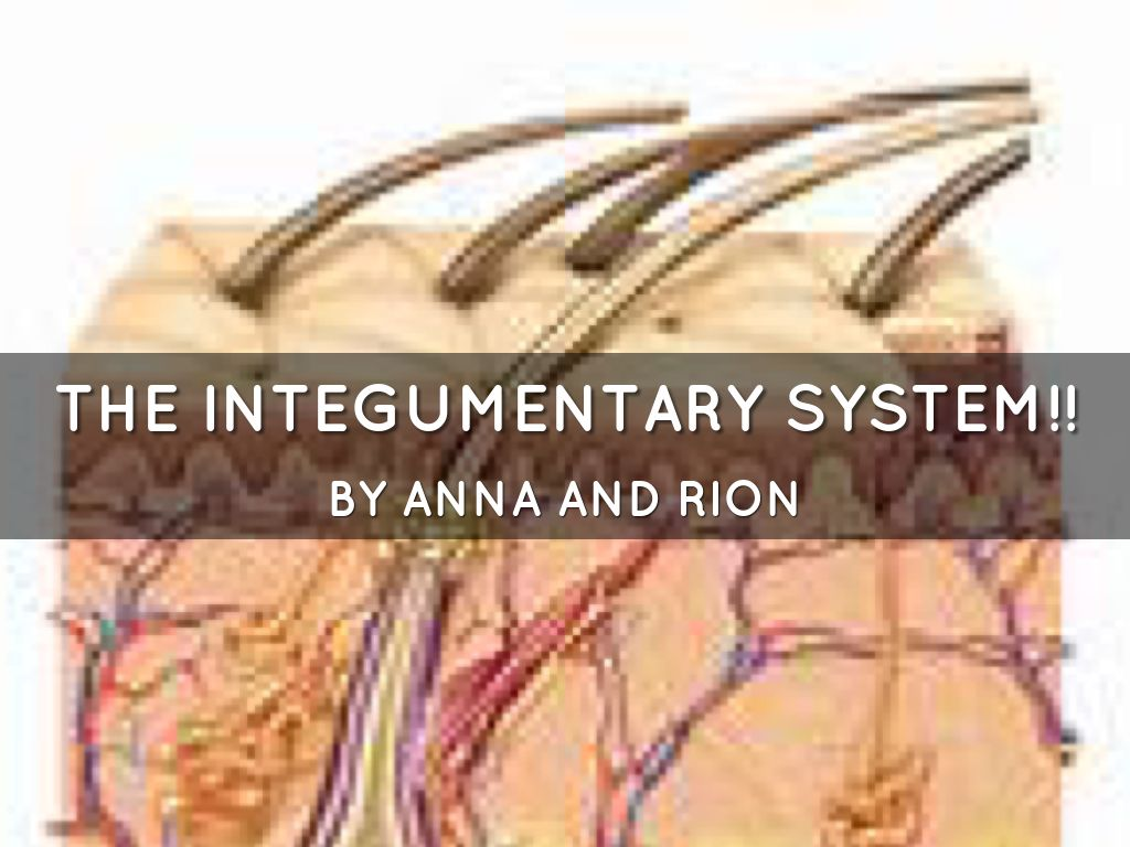The Integumentary System By Ms Dickie