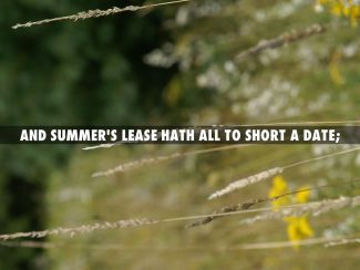 Image result for quotation summer's lease short