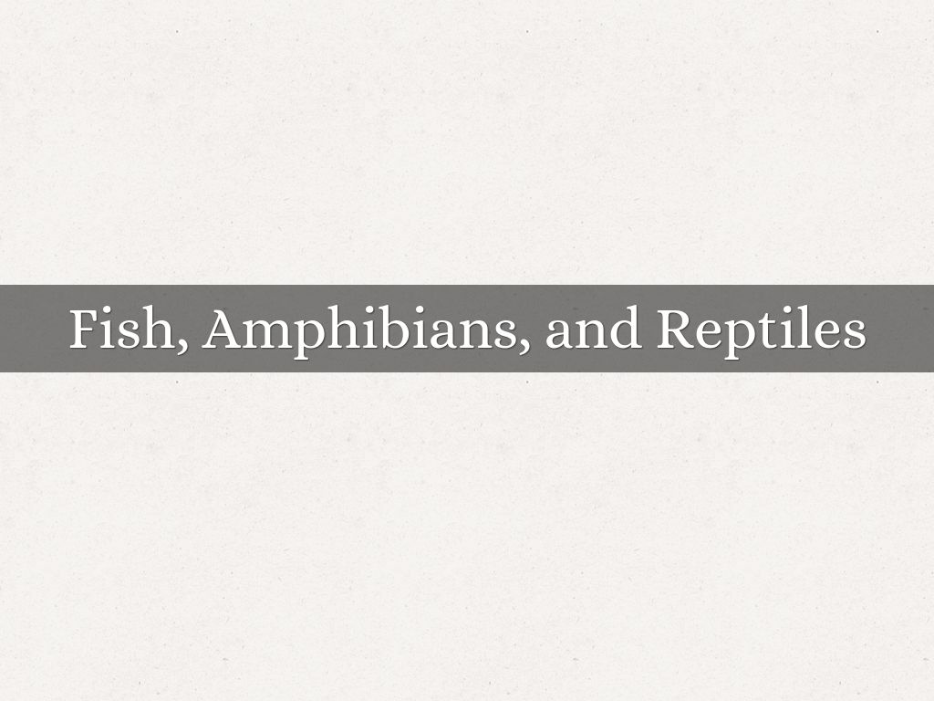 Fish Amphibians And Reptiles By Jennifer Daniel