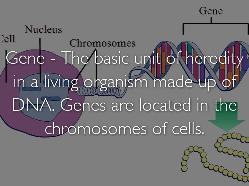 Genetics Vocabulary By Skylar Smith