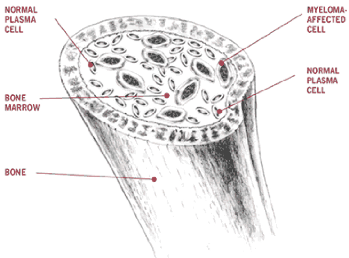 Bone Cell Diagram Labeled