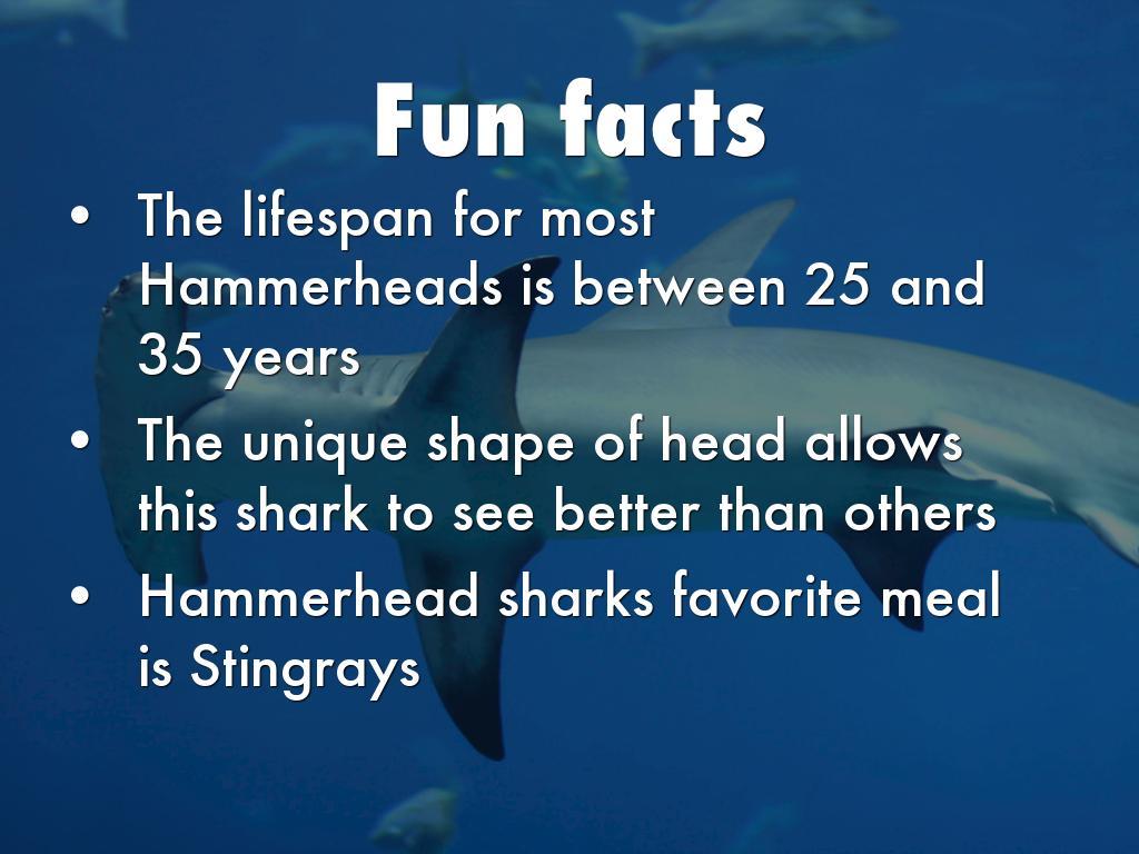 Copy Of Hammerhead Shark By Pablo Perini