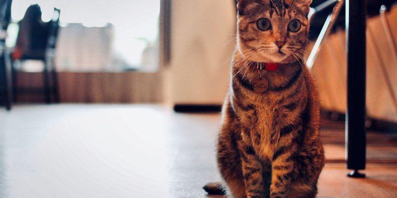 【桃園】桃園DeMo House戴莫好食屋,友善的寵物餐廳,喜歡貓咪的喵友必來!
