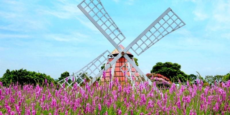 台中旅遊景點/后里中社觀光花市,一年四季都可拍照賞花打卡的好去處