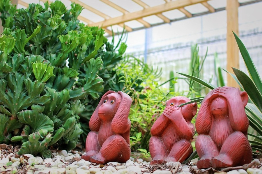 新竹旅遊景點/新埔福祥仙人掌,帶著寶貝免費入園認識採買仙人掌及多肉植物