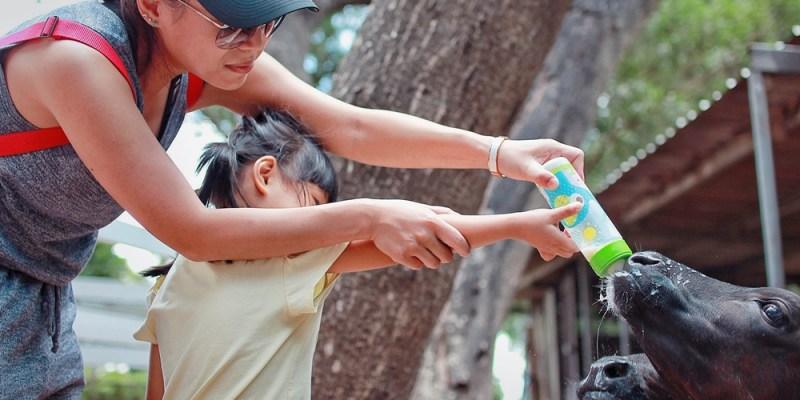 苗栗旅遊景點/竹南四方鮮乳牧場,小孩樂玩急速滑草坡,門票抵換濃醇香乳製品,吃喝玩樂好開心