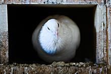 Looking beyond Our Pigeonholes