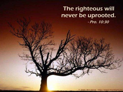 Proverbs 10:30 (47 kb)