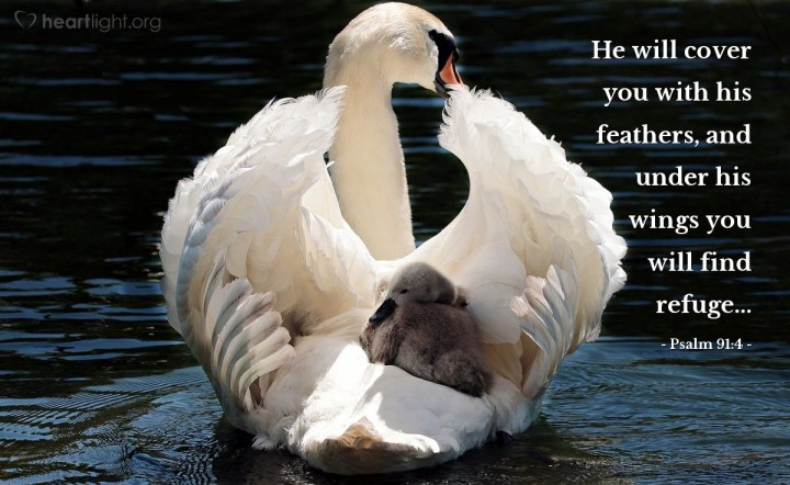 Illustration of Psalm 91:4 — He will cover you with his feathers, and under his wings you will find refuge...