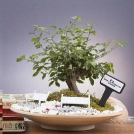 Sevdiklerinize Hediye Ahşap Saksıda Bonsai Bahçe