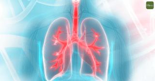 190725-肺