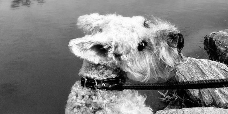 FB190209-愛犬病逝