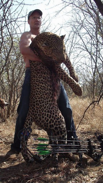 This photo shows Walter Palmer with a leopard he killed in Zimbabwe with a bow and arrow. Photo: Blogspot.
