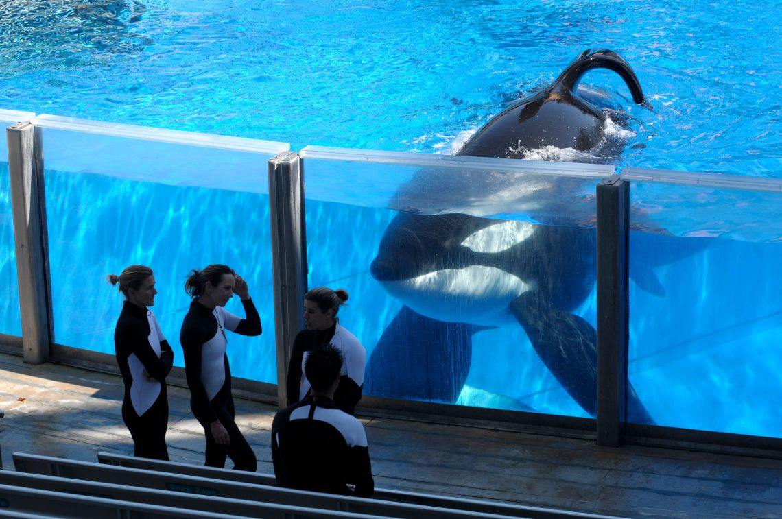 Tilikum, The 'Blackfish' SeaWorld Orca Who Killed A Trainer Has Died