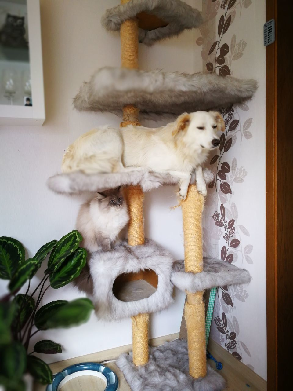Dog Who Grew Up With Cats Loves Nothing More Than Chilling In The Cat Tree