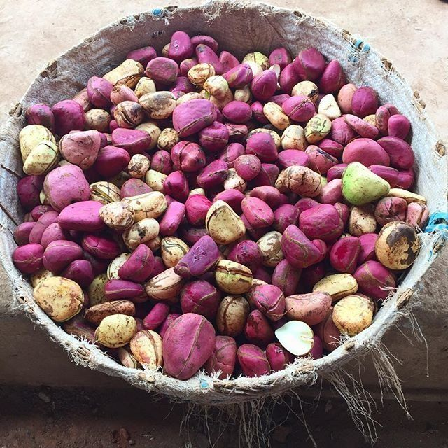 A basket full of kola nuts that have been peeled from their pod.