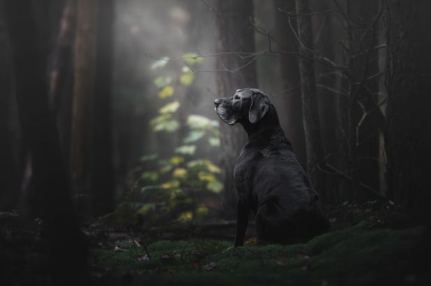 """<strong>First Place and Overall Winner</strong><br>""""The Lady of the Mystery Forest""""<br>Noa, Great Dane, Netherlands"""