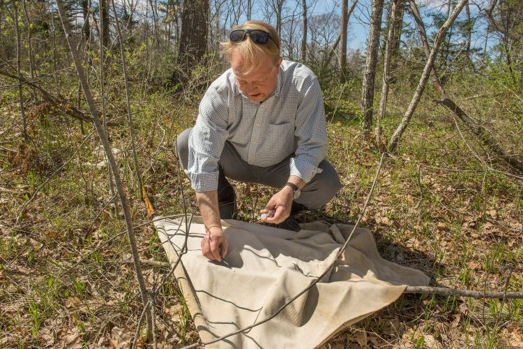 Chuck Lubelczyk, a vector-borne ecologist with Maine Medical Center, collects ticks at a site in Cape Elizabeth.