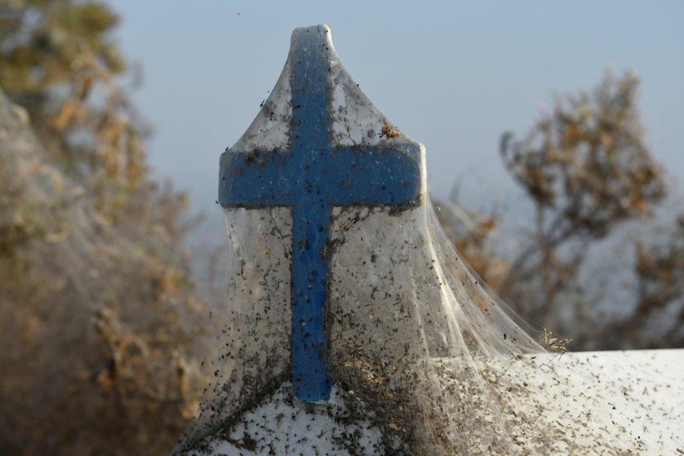A veil of spider webs cover this religious shrine.