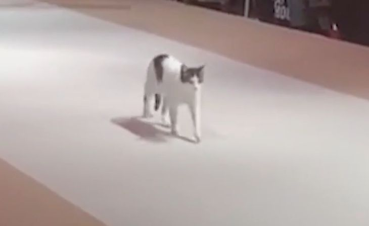 Cat Gatecrashes Catwalk And Licks Bum, And 4 Other Fab Animal Moments Of The Week