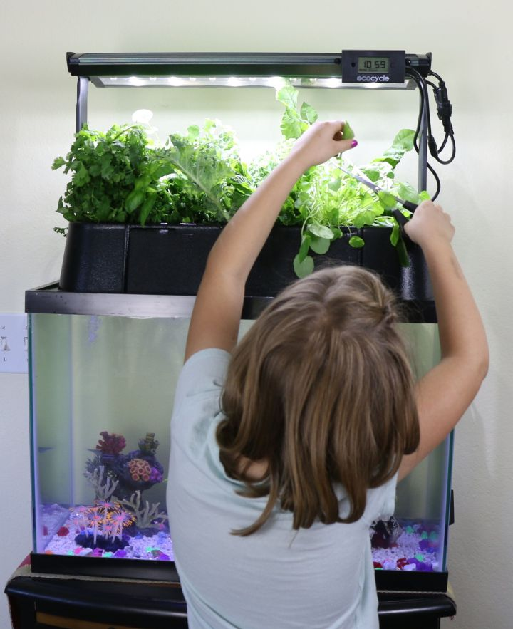 A child tends to an Ecolife tank in a school classroom.