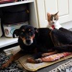 일본에서 개와 고양이의 마이크로칩 장착이 의무화된다