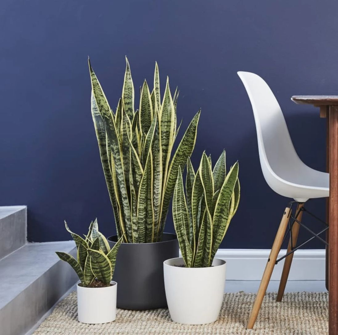 9 Places In Canada You Can Buy Houseplants Online Huffpost Canada Life