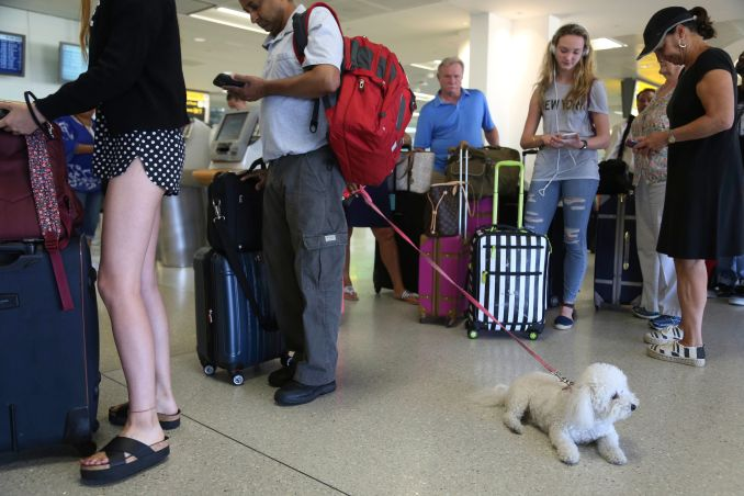 In this Aug. 8, 2016, file photo, a dog named Jazzy waits in line with Delta passengers at a ticket counter in Newark Liberty International Airport in Newark, New Jersey.