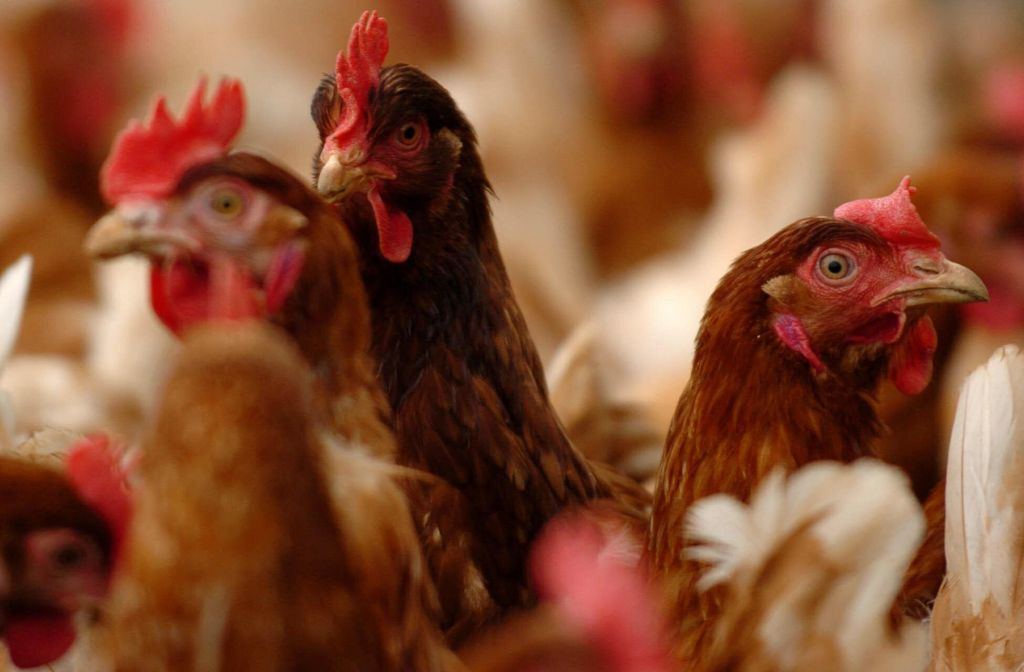 Chlorinated Chicken Will Be The Norm If MPs Aren't Given Stronger Powers Over Trade