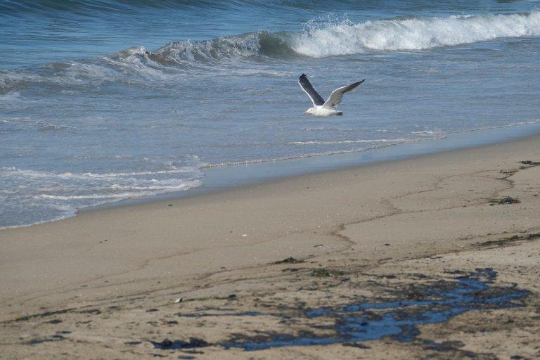 Major Southern California Oil Spill Fouls Beaches, Kills Wildlife