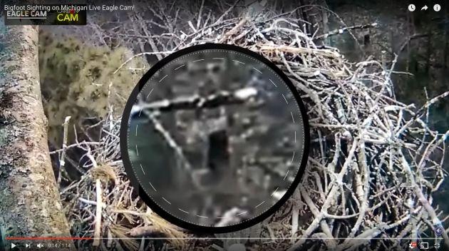 Resultado de imagen de Cámara en un nido de águilas captura a Pie Grande