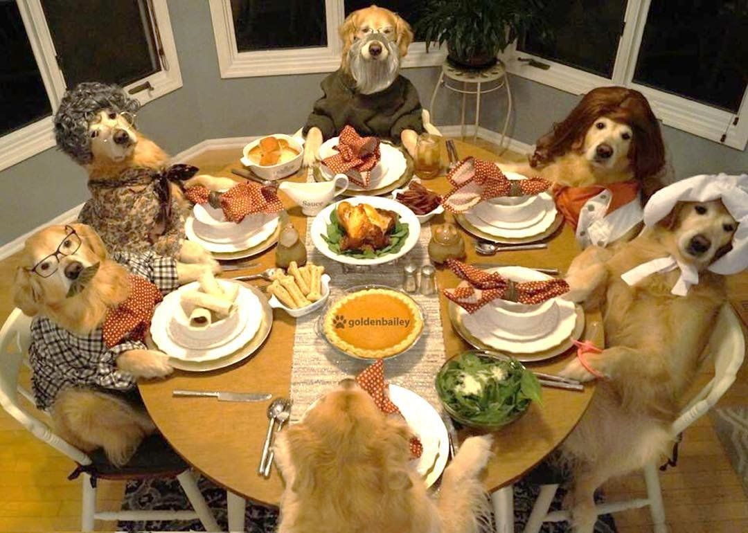 Thanksgiving Hints Amp Tips To Keep Your Pets Food Safe