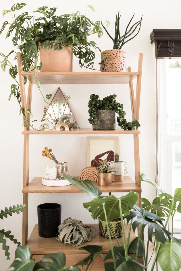 Bookshelf with succulents and other plants