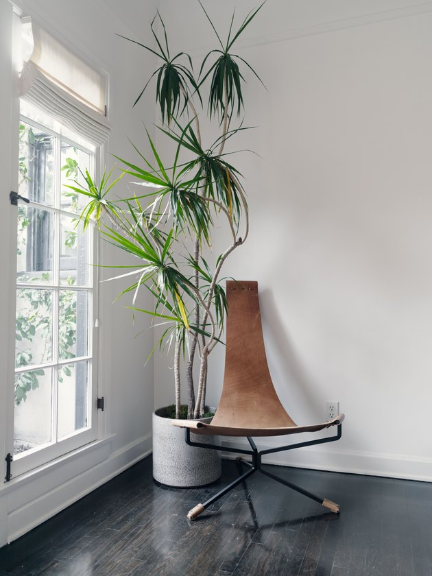 Tall plant in corner next to a leather chair