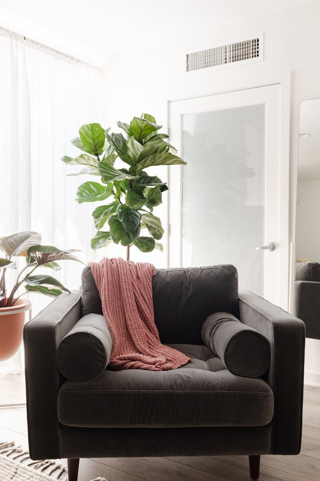 Chair with fiddle-leaf fig tree